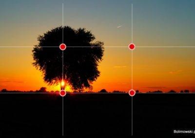 Drzewo - trojpodział