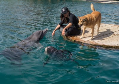 Rafa delfinów, Eilat, Izrael