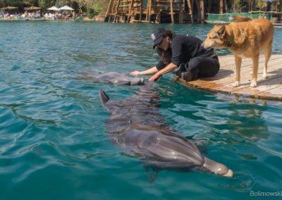 Rafa delfinów, Eilat,Izrael