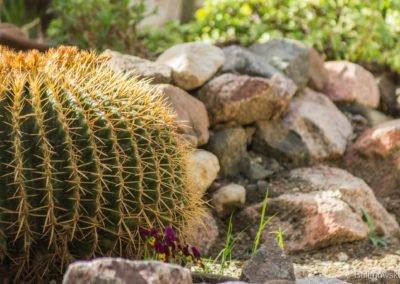 Ogród botaniczny, Eilat, Izrael