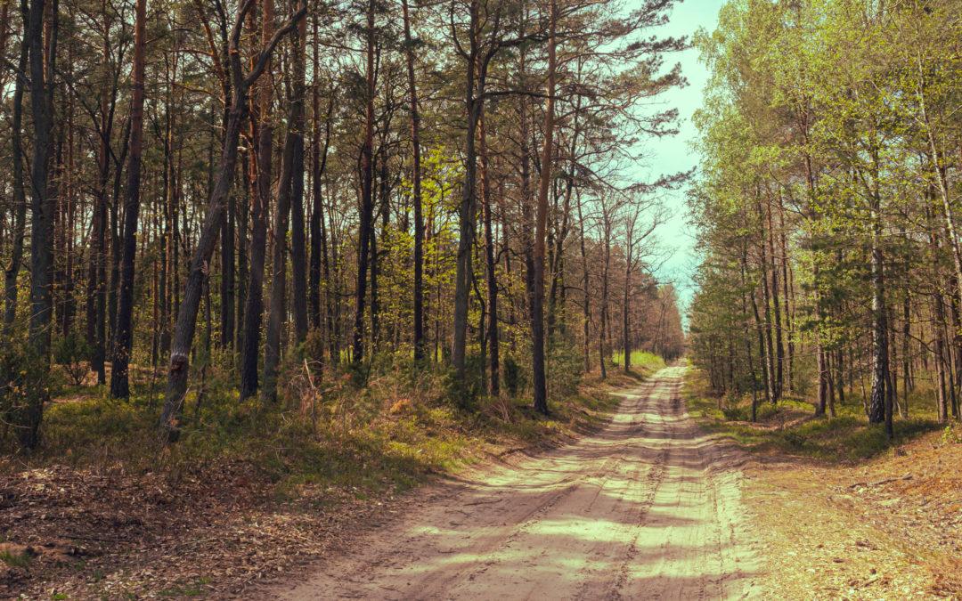 Bolimowski Park Krajobrazowy – maj 2020